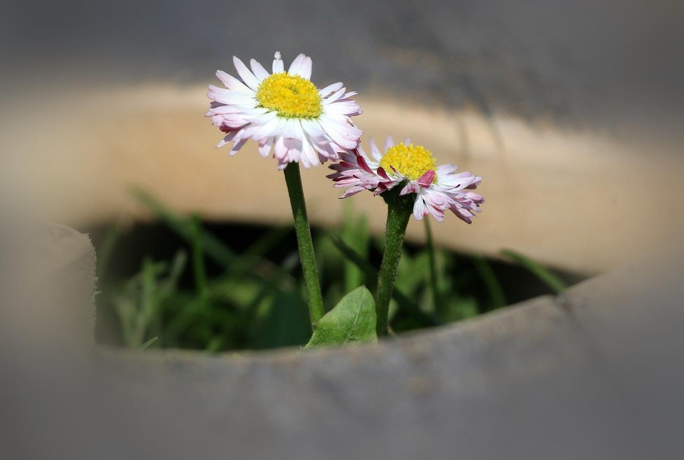 nudge flower